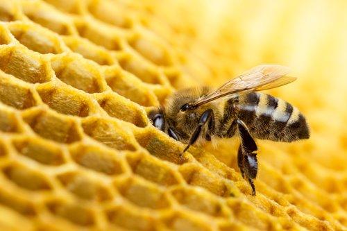 Apithérapie: les abeilles au secours de notre santé – Le 21 décembre