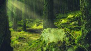 La forêt et les plantes guérisseuses: écriture en pleine nature